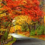 Best Fall Getaways Near Simcoe- beautiful fall coloured leaves over a road